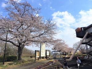ネイチャーセンター桜